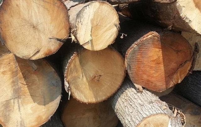 nội thất gỗ tự nhiên 3
